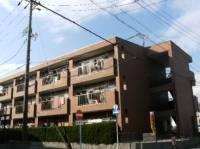愛知県大府市江端町3丁目の賃貸マンションの外観